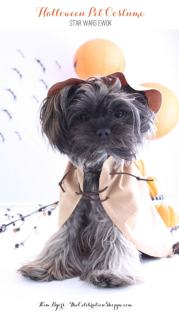 1-Ewok-Star-Wars-Pet-Costume-Kim-Byers-6780-680wl