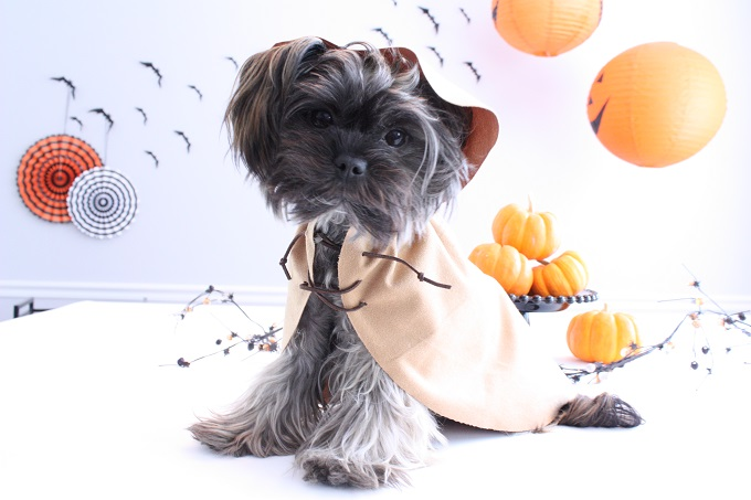 2-Ewok-Star-Wars-Pet-Costume-Kim-Byers-6781-680
