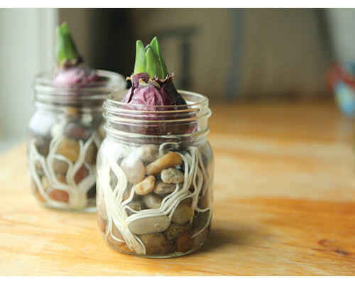 mason jar bulbs