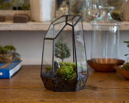 DIY Projects That Get Creative with Houseplants