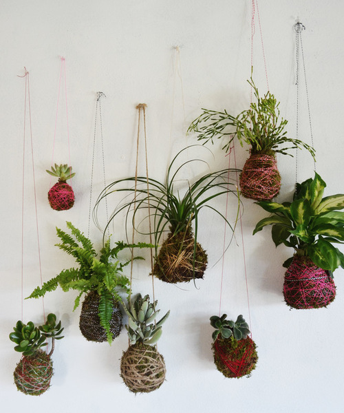 diy houseplants